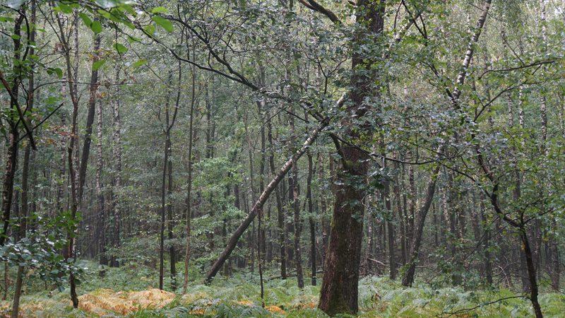 BVL - Wald Gangelshausen (25)